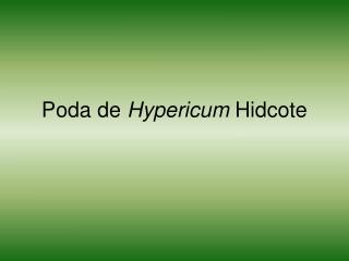 Poda de Hypericum Hidcote