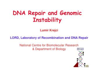 DNA Repair and Genomic Instability