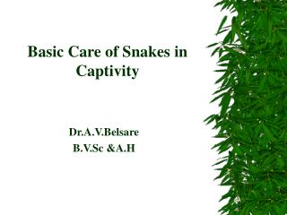 Basic Care of Snakes in Captivity