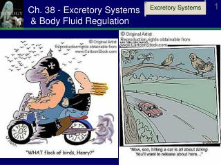 Ch. 38 - Excretory Systems  & Body Fluid Regulation