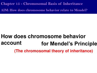 How does chromosome behavior account