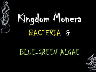 Kingdom Monera BACTERIA   &   BLUE-GREEN ALGAE