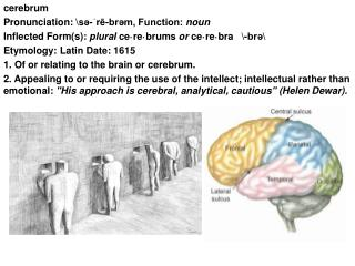cerebrum Pronunciation: \sə-ˈrē-brəm, Function:  noun