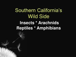 Southern California's Wild Side  Insects * Arachnids Reptiles * Amphibians
