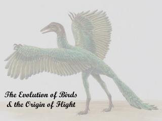 The Evolution of Birds & the Origin of Flight