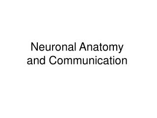 Neuronal Anatomy and Communication