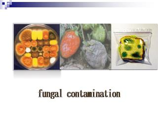 fungal contamination