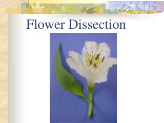 Flower Dissection