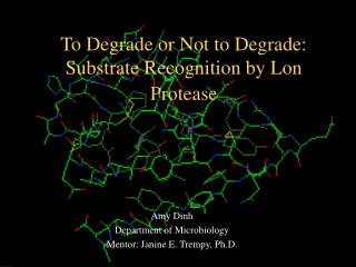 To Degrade or Not to Degrade: Substrate Recognition by Lon Protease