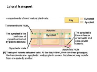 Lateral transport: