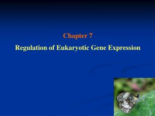 Chapter 7 Regulation of Eukaryotic Gene Expression