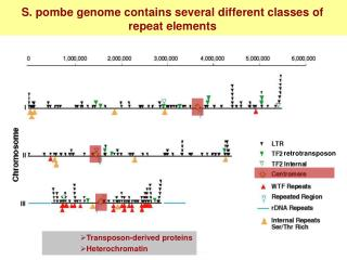 S. pombe genome contains several different classes of repeat elements