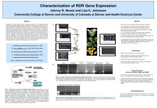 Characterization of RDR Gene Expression Johnny R. Nunez and Lisa K. Johansen