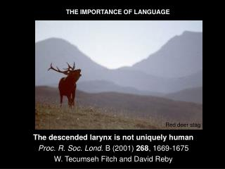 The descended larynx is not uniquely human Proc. R. Soc. Lond.  B (2001)  268 , 1669-1675