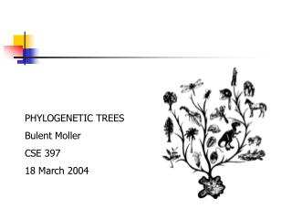 PHYLOGENETIC TREES Bulent Moller CSE 397  18 March 2004