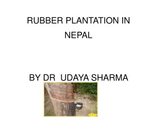 RUBBER PLANTATION IN NEPAL BY DR  UDAYA SHARMA