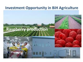 Investment Opportunity  in BiH Agriculture