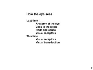 How the eye sees Last time 	Anatomy of the eye 	Cells in the retina 	Rods and cones