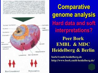 Comparative genome analysis