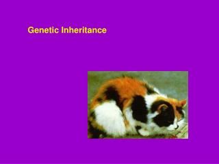 Genetic Inheritance