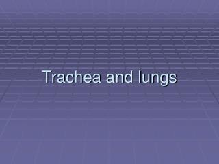Trachea and lungs