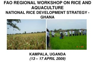 FAO REGIONAL WORKSHOP ON RICE AND AQUACULTURE NATIONAL RICE DEVELOPMENT STRATEGY - GHANA