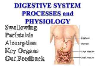 DIGESTIVE  SYSTEM  PROCESSES and PHYSIOLOGY