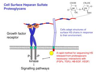 Cell Surface Heparan Sulfate Proteoglycans
