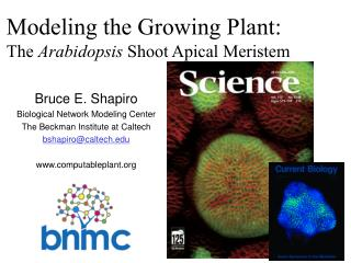 Modeling the Growing Plant:  The  Arabidopsis  Shoot Apical Meristem