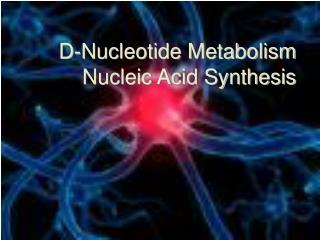 D-Nucleotide Metabolism Nucleic Acid Synthesis