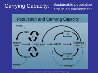 Carrying Capacity: