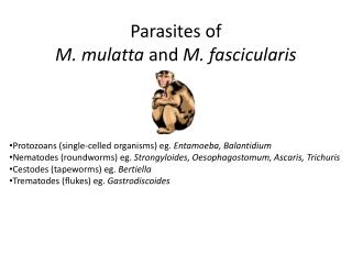 Parasites of M. mulatta and M. fascicularis