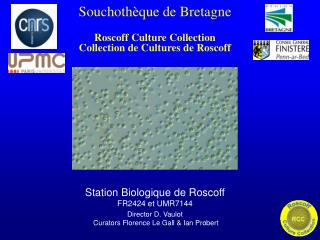 Souchothèque de Bretagne Roscoff Culture Collection Collection de Cultures de Roscoff
