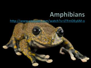 Amphibians youtube/watch?v=LTFmOEy6M-o