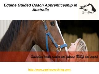 Equine Guided Coach Apprenticeship in Australia
