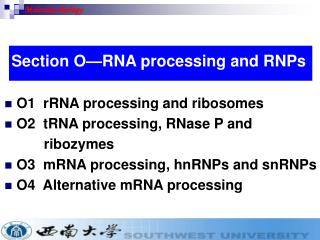 O1  rRNA processing and ribosomes O2  tRNA processing, RNase P and            ribozymes