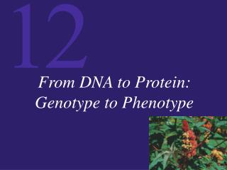 From DNA to Protein: Genotype to Phenotype