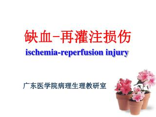 ischemia-reperfusion injury