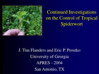 Continued Investigations on the Control of Tropical Spiderwort