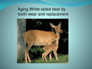 Aging White-tailed deer by  tooth wear and replacement