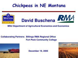 Chickpeas in NE Montana