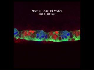 March 15 th , 2010 - Lab Meeting midline cell fate
