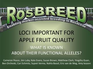 LOCI IMPORTANT FOR APPLE FRUIT QUALITY WHAT IS KNOWN ABOUT THEIR FUNCTIONAL ALLELES?