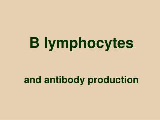 B lymphocytes and antibody production