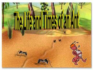 The Life and Times of an Ant