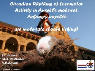 Circadian Rhythms of Locomotor Activity in Ansell's mole-rat,  Fukomys anselli: