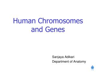 Human Chromosomes and Genes