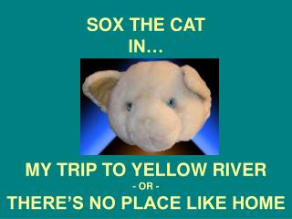 SOX THE CAT IN…