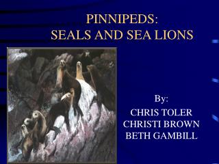 PINNIPEDS:   SEALS AND SEA LIONS