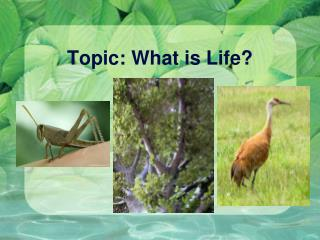 Topic: What is Life?